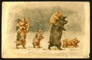 Pigs in a snowstorm