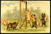 Pigs take turns on the swing