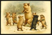 Pigs play 'ring-o-roses' in the snow