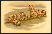 Pigs play leapfrog