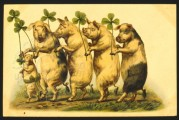 Four pigs with 4 leaf clovers